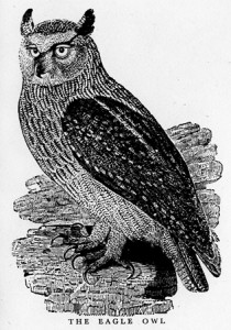 The Eagle Owl By Thomas Bewick