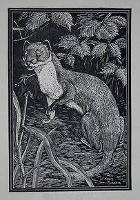 Polecat Woodcut